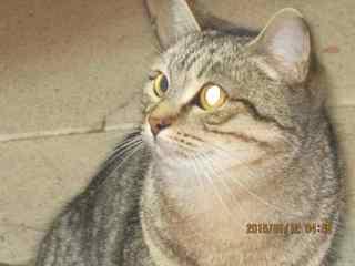 スペインの猫