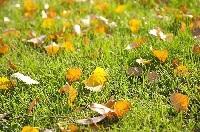 「秋の涼しさ」