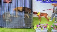 ライオンと土佐犬
