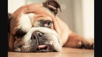 犬の老化を防ぐ方法