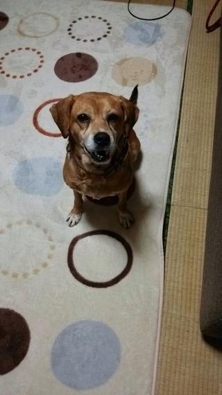 待望の犬預かりボラさん加入☆