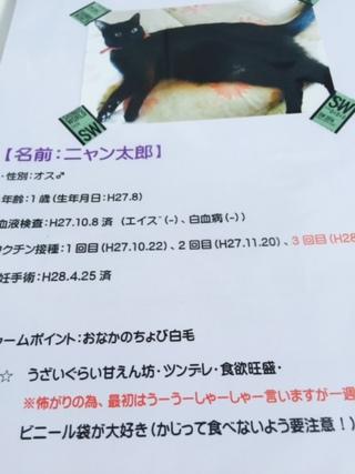 10月9日(日)プーラビーダ譲渡会のご報告です!