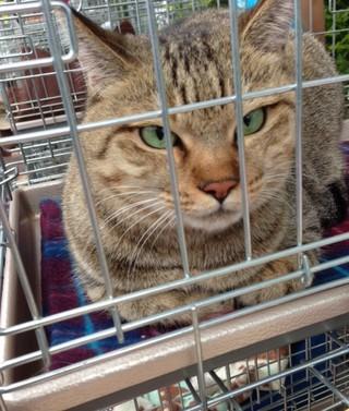 アニボン村住猫票;D005ルビーちゃん