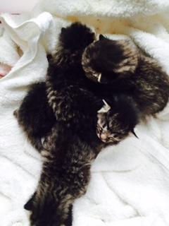 前足をなくした黒猫ちゃんとレスキュー子猫たち