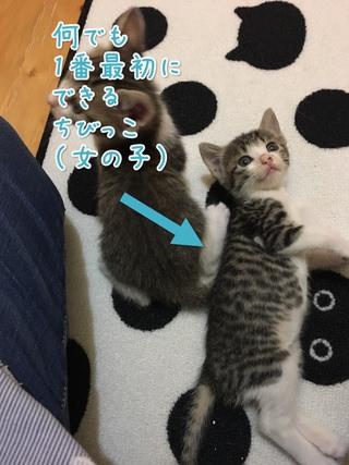 明日7月23日(日)譲渡会のご案内と迷子猫の情報です。