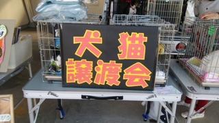 11月4日5日「宮崎トヨタ」11月12日森林公園譲渡会のご報告のです。