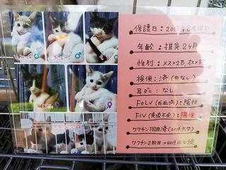 2019.9.29譲渡会のご報告 阿波岐原森林公園