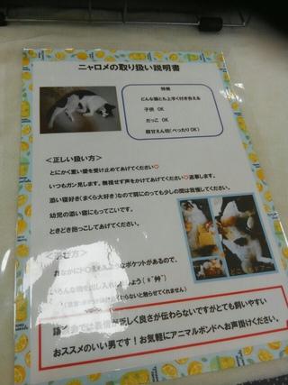 2019.7.7譲渡会のご報告 みやざき動物愛護センター