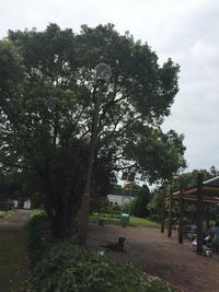 2018年9月2日譲渡会のご報告 阿波岐原森林公園