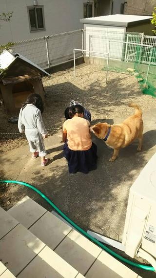 2018年4月8日譲渡会のご報告 PURA☆VIDA PLUS PLUS