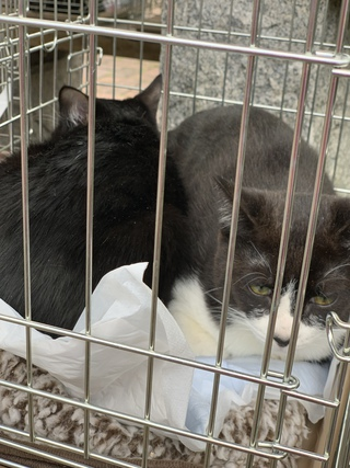 2018.11.25阿波岐原森林公園 譲渡会のご報告