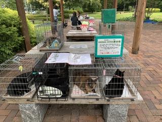2019.6.23譲渡会のご報告 阿波岐原森林公園