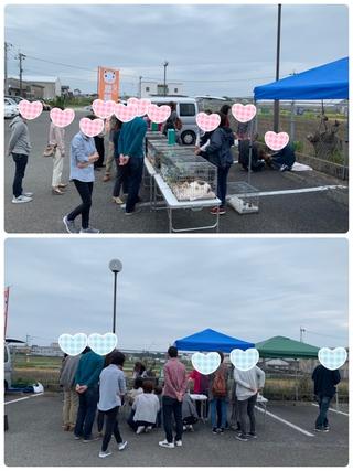2019.4.14譲渡会のご報告 PURA•VIDA