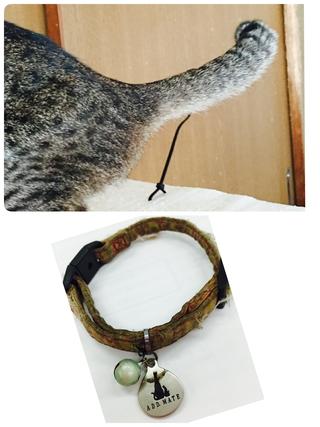 [迷子猫]メスのキジネコ