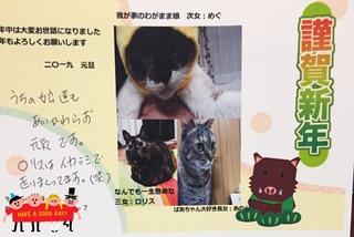 2019.1.13阿波岐原森林公園譲渡会のご報告