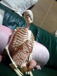 人体模型すわる