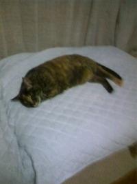ベッドに横たわるらーちゃん