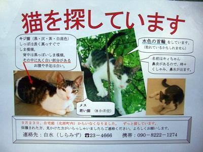11/13 譲渡会報告