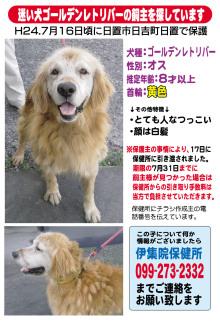 迷子犬の飼い主さんを探しています!