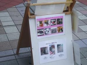 街頭募金写真&御支援のご報告