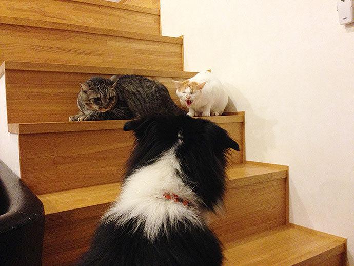 ミシェル君 猫と階段で睨みあい