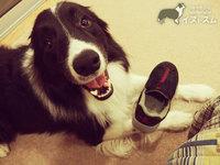 靴を咥えて持ってくる。ティッシュ食べちゃう。