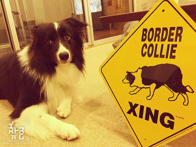 ボーダーコリーのサインボード(BORDER COLLIE XING)