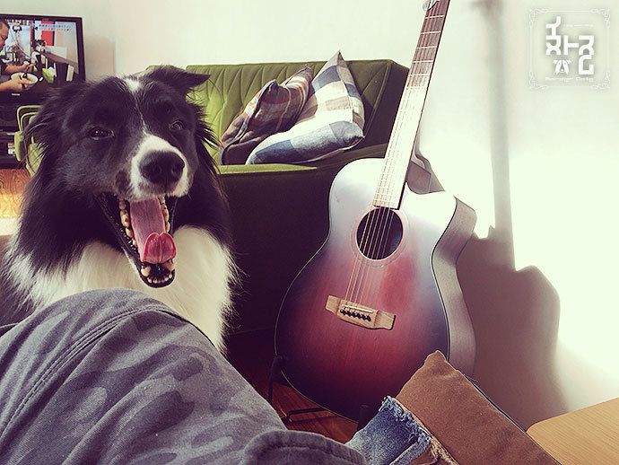 Image result for 犬 border collie あくび