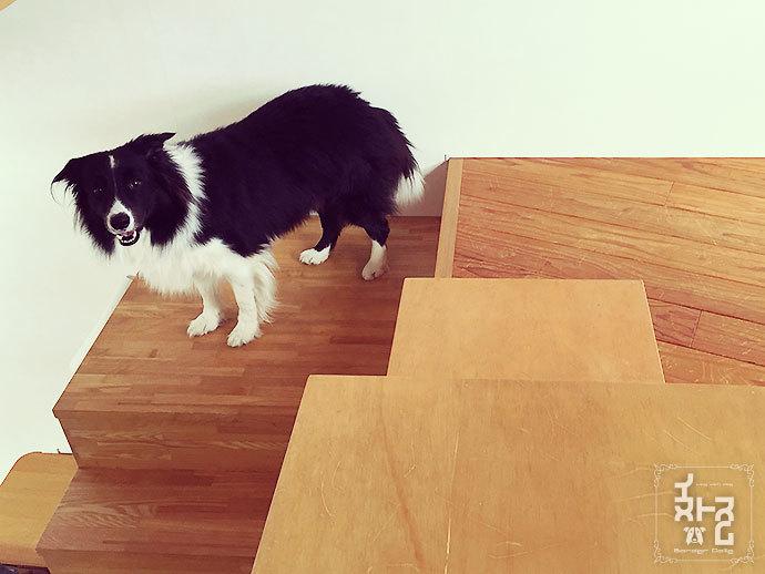 階段降りるで~のミシェル坊