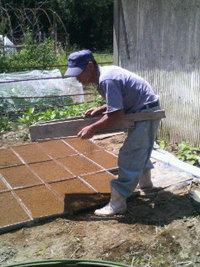 お米の種植え