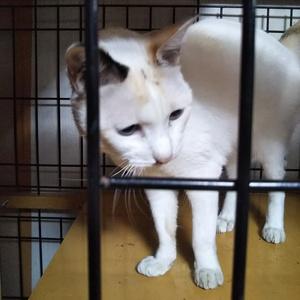 保護施設の猫達