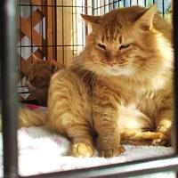 守る会の保護猫達です(^^)2