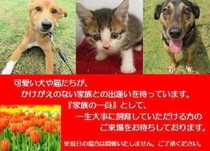 みやざき動物愛護センター譲渡会(1月12日)