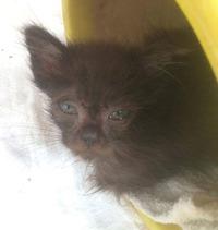 佐土原町で子猫が保護されています