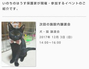 週末の譲渡会情報♪(12月3日)