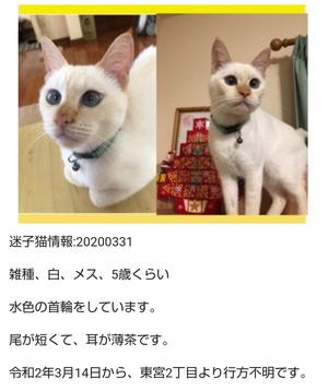 宮崎市のホームページに犬猫の保護情報が掲載されています