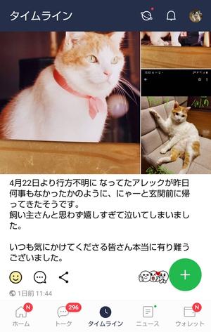 宮崎市高岡町の迷子猫(解決♪)