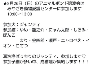 週末の譲渡会情報(8月26日)