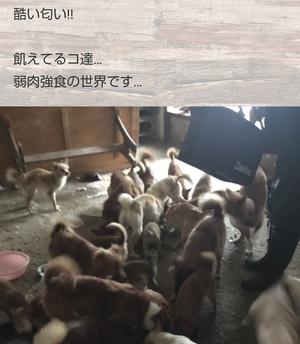 また、宮崎県内で多頭飼育崩壊です
