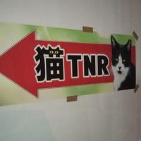 宮崎市TNR