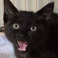 子猫います。