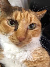 宮崎市で保護された猫(訂正)