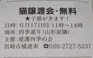 週末の譲渡会情報(6月17日)