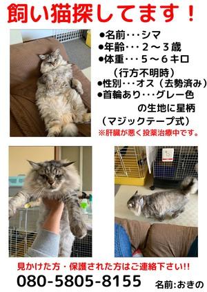 宮崎市田野町で迷子猫