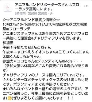 週末の譲渡会情報(10月27日(土))