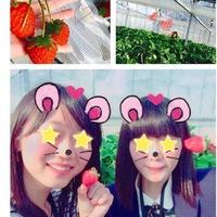 今年 初のイチゴ☆彡