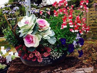 3月はお花がいっぱい