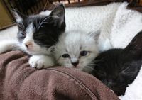 日曜日は子猫譲渡会