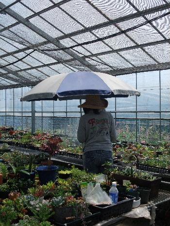 梅雨と紫外線対策