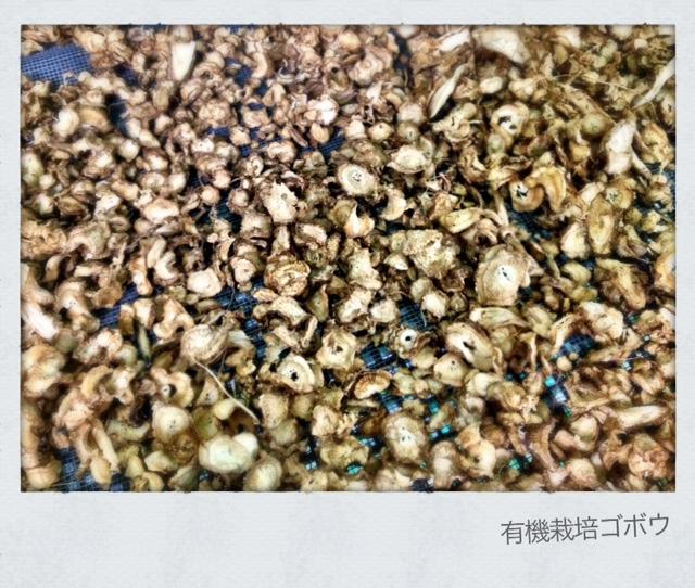 有機栽培ゴボウの乾燥